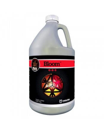 Cutting Edge Solutions Bloom 0 - 6 - 5